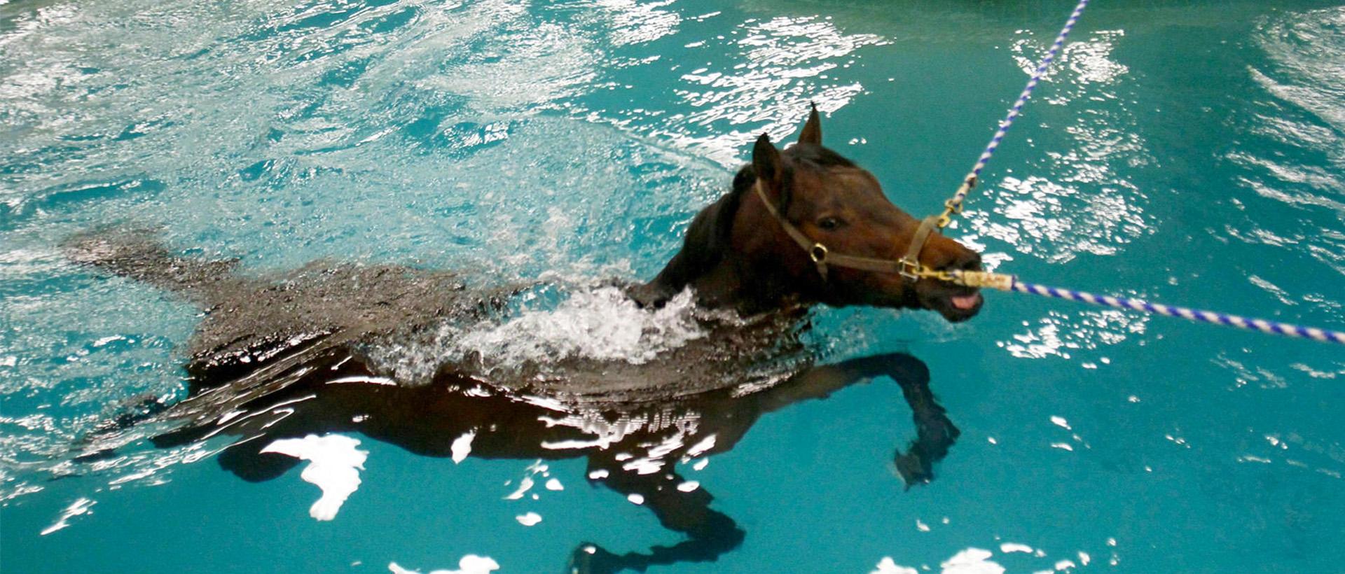 animal-pool-desert-leisure